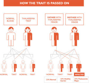Thalassaemia Carrier Chart