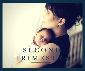 second trimester guide for fathers